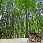 Bamboo Platform